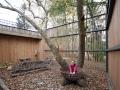 Fa köré épült udvar, fészekkel