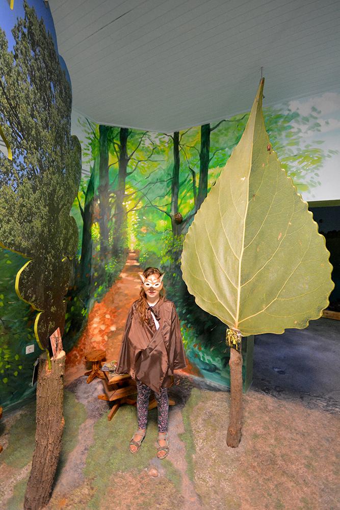 Az őzike előmerészkedik az erdőből