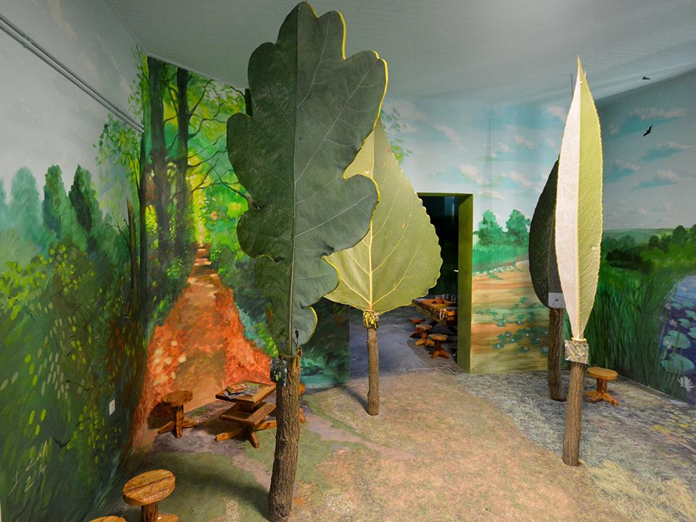 Az erdő övezetességnek bemutatása